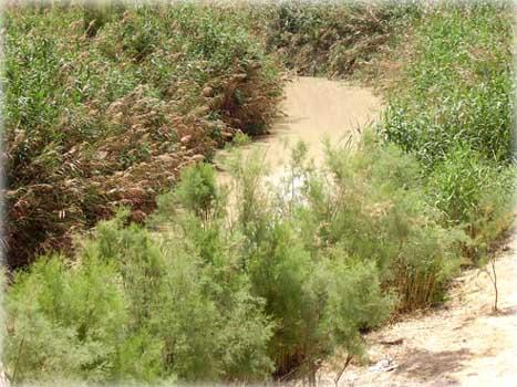 Святая река Иордан на месте Крещения Господня